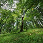 عکاسی جنگل خیرود متعلق به دانشگاه منابع طبیعی تهران (دانشگاه تهران) توسط فرح منش
